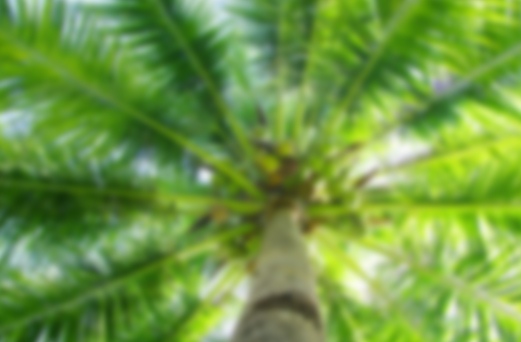 under a jamaican cocomut tree